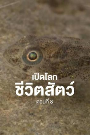 Goodtv_ANM_2564-07-21