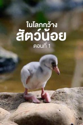 goodtv_ANM_2564-05-74